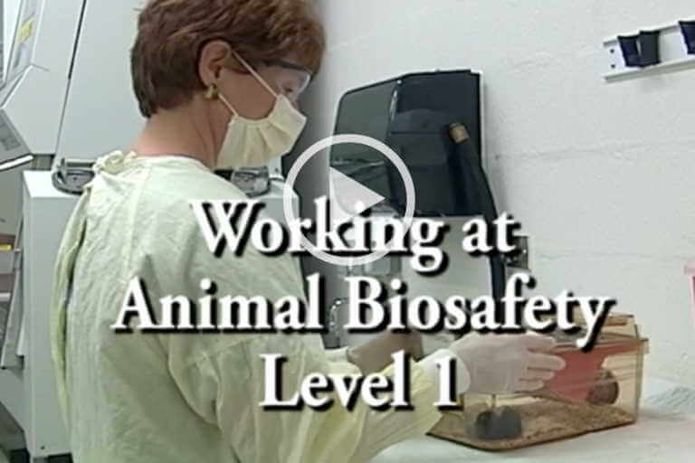 Working at Animal Biosafety Level 1