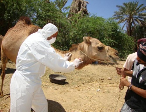 MERS Not New to Camels